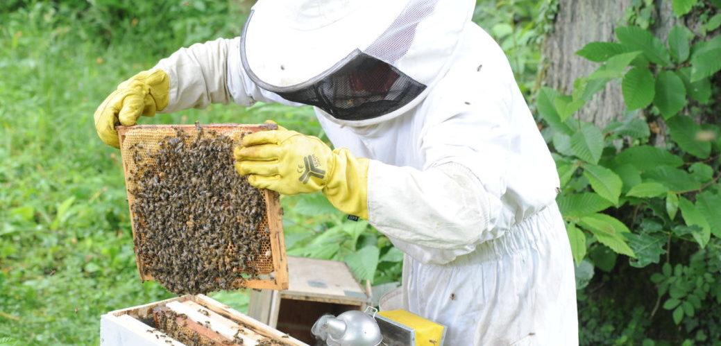 Les principales activités apicoles
