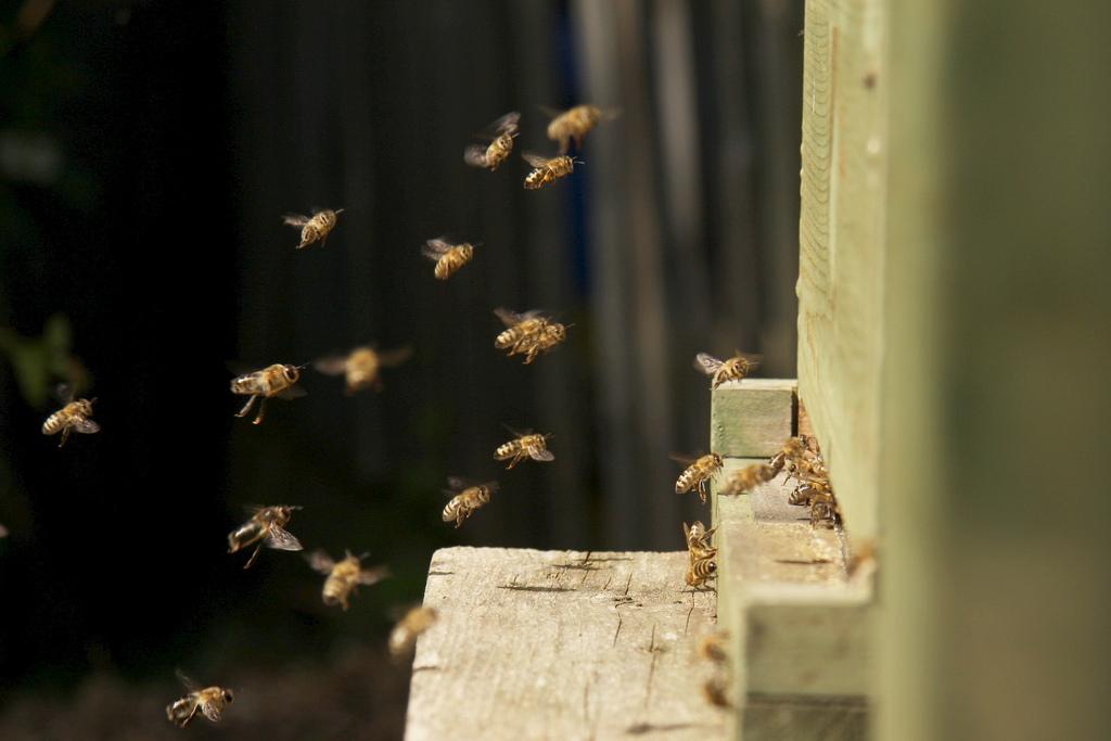 Découvrir la vie des abeilles après la récolte
