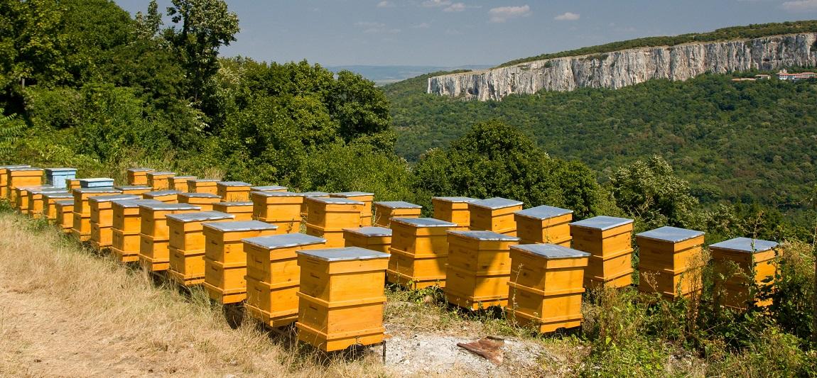Les différents types de ruches