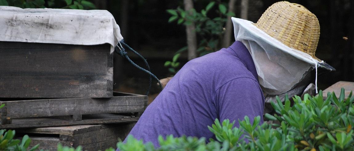 Deux principales activités de l'apiculteur