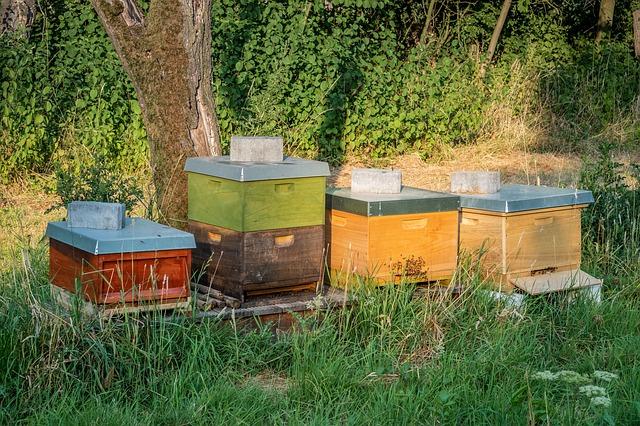 Installer sa propre ruche et son essaim