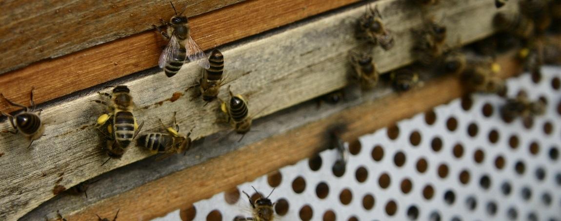 La ruche Dadant, modèle le plus utilisé en Europe