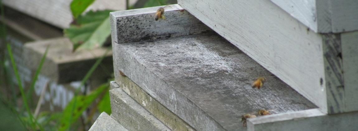La ruche Langstroth, également appelée ruche standard