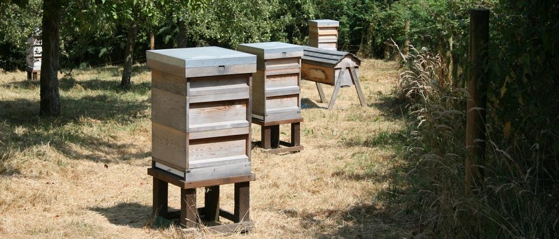 La ruche Warré, proche de l'habitat naturel de l'abeille