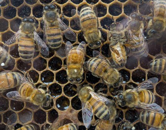 Etats-Unis : premières mesures contre les pesticides tueurs d'abeilles