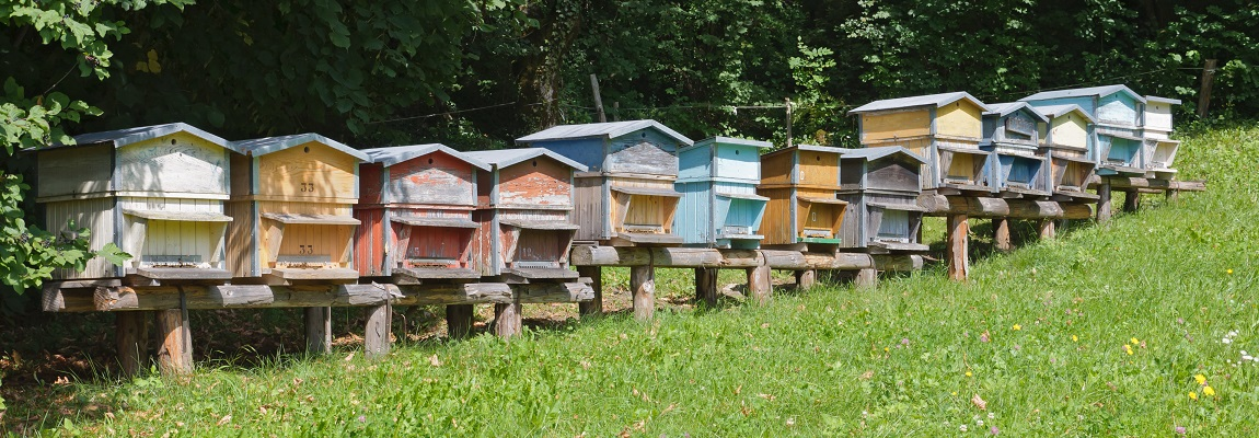 Bon à savoir sur la ruche Voirnot