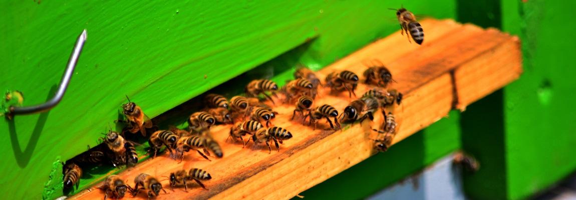 A la découverte de la ruche Dadant