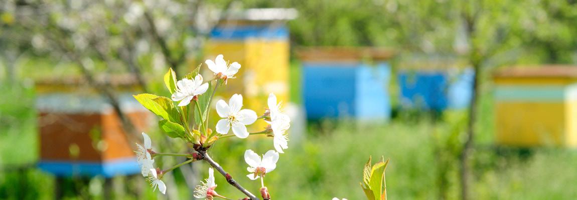 Visite de suivi de la ruche