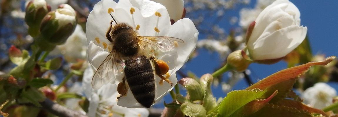 Info réglementation en apiculture