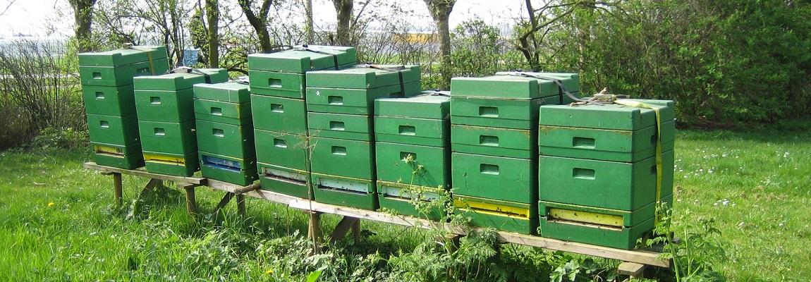 Déplacer une ruche, zoom sur la transhumance apicole