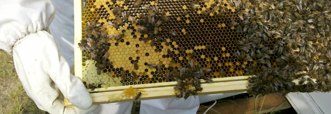 Gestion de ruchée et des cadres
