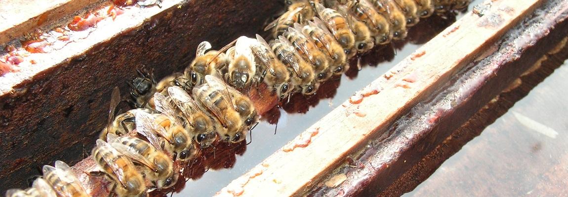 VIDEO : Le nourrissement des abeilles