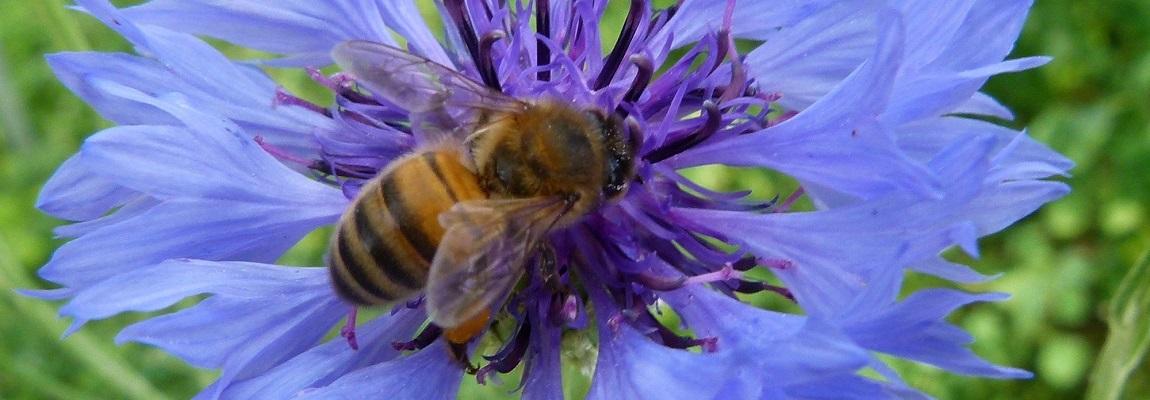 4e Journées de la recherche apicole !