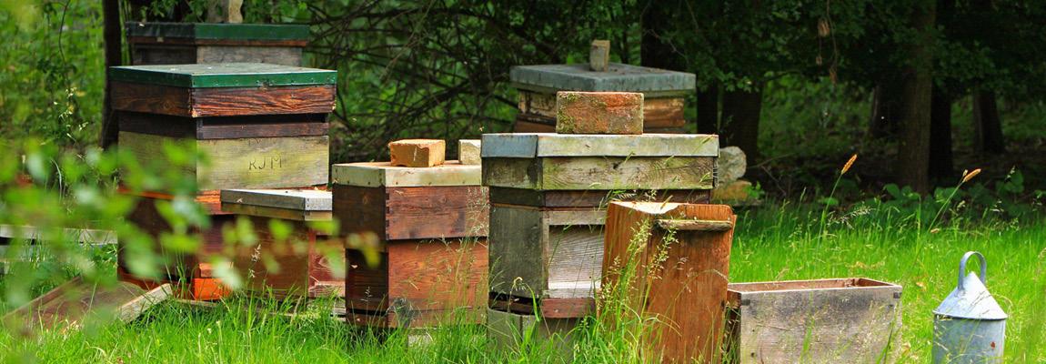 VIDÉO : L'apiculture pour tous