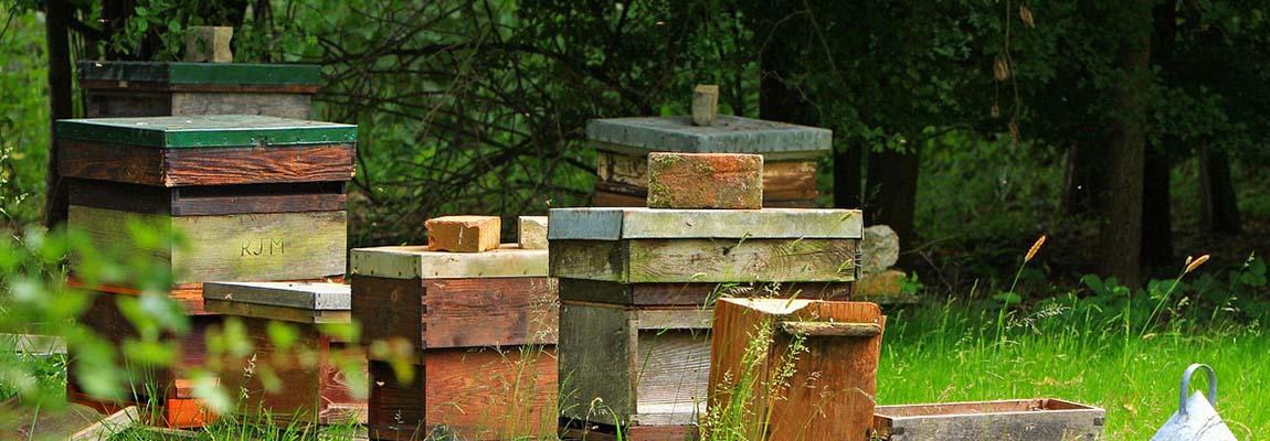 Lutte contre le varroa : utilisation des médicaments à base de Thymol