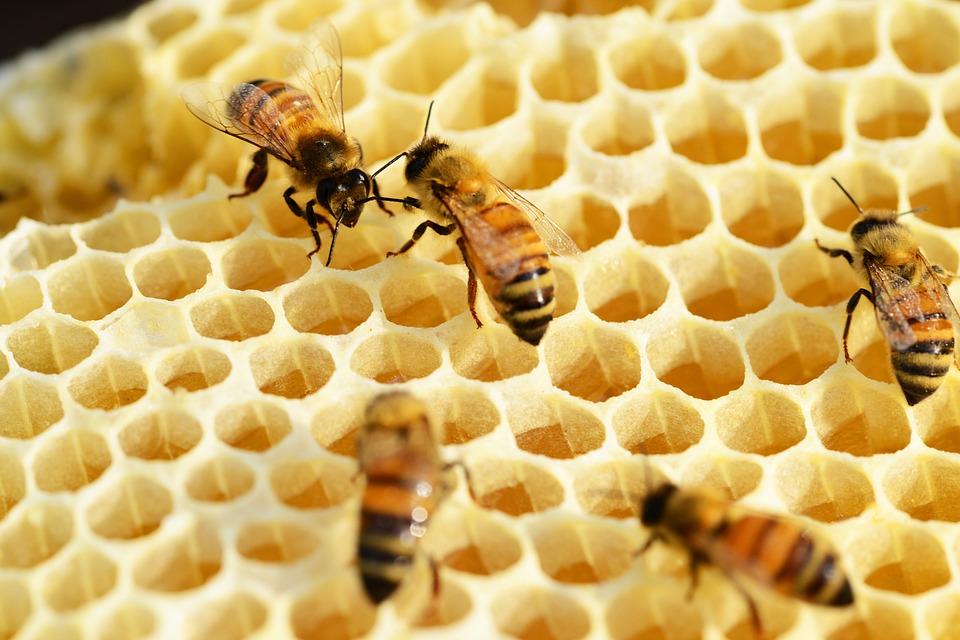 cire d'abeille cellules