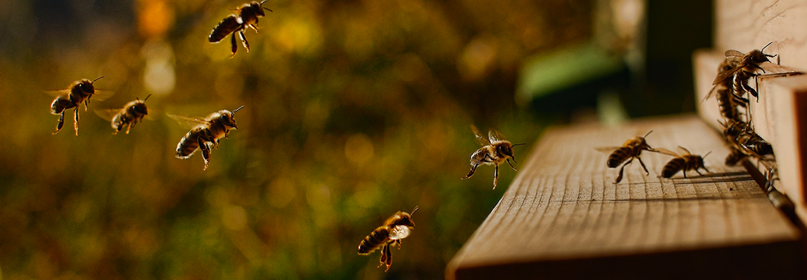 B-Keep au service de vos abeilles !