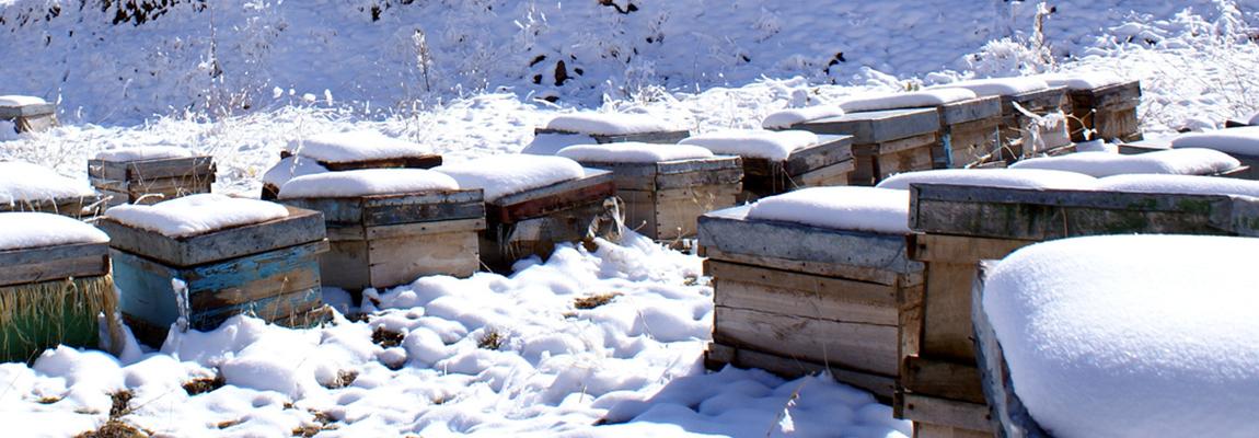 Bilan de l'enquête sur les pertes hivernales 2016/2017 en Grand Est