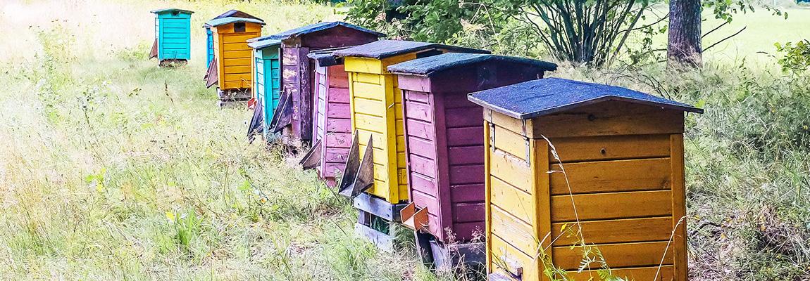 Installer sa propre ruche