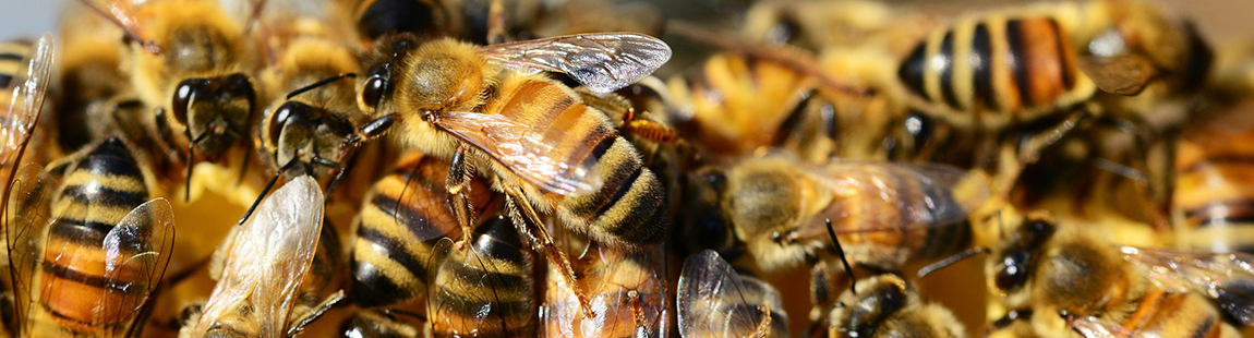Ruche Kényane, la ruche horizontale qui séduit les apiculteurs débutants
