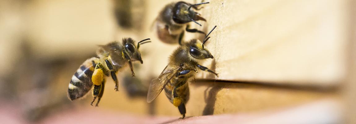 Dans la ruche en juin – Lettre d'information