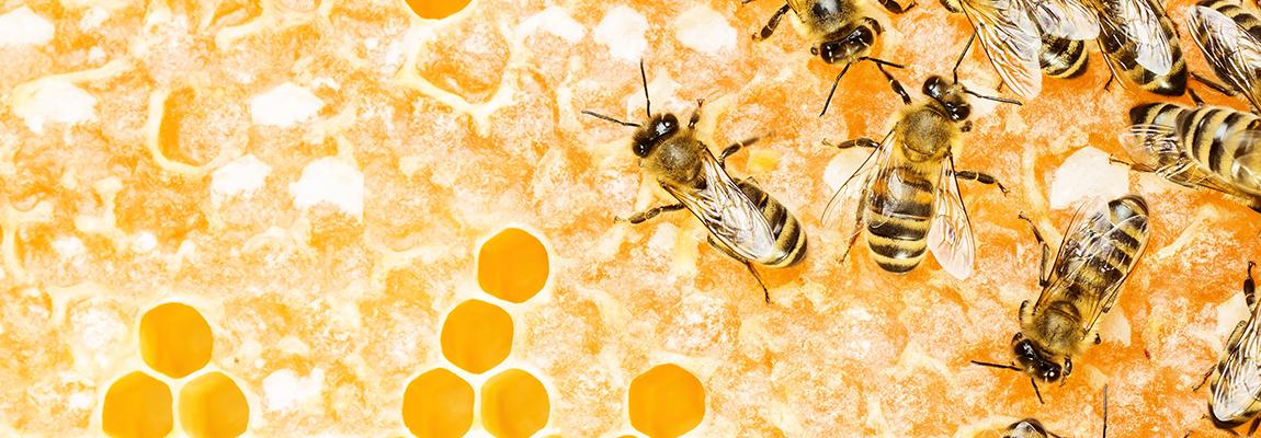 Dans la ruche en Août – Lettre d'information