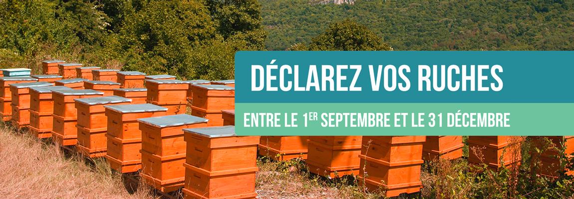 Déclarez vos ruches : entre le 1er septembre et le 31 décembre !