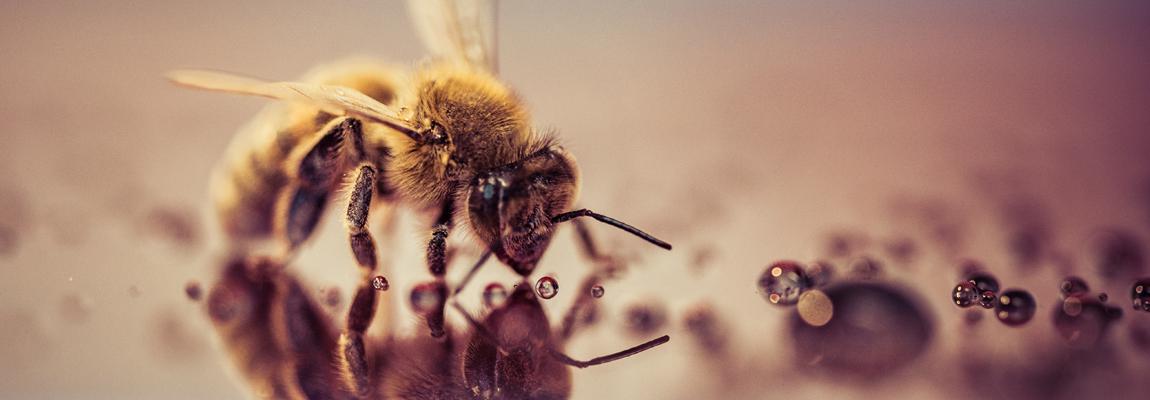 Dans la ruche en septembre – Lettre d'information