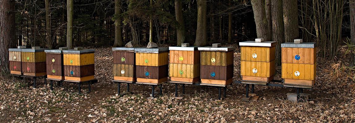 ruche au mois d'octobre