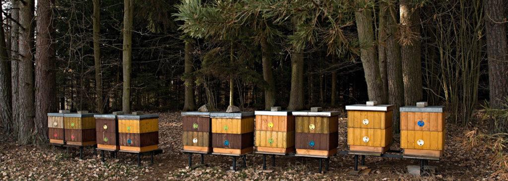 Hivernage des colonies : comment préparer ses ruches