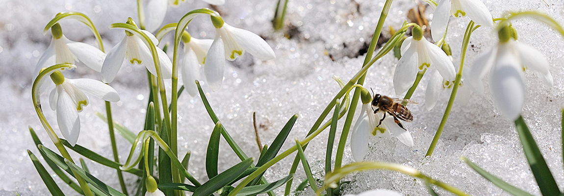 Que se passe-t-il dans la ruche en Février ?