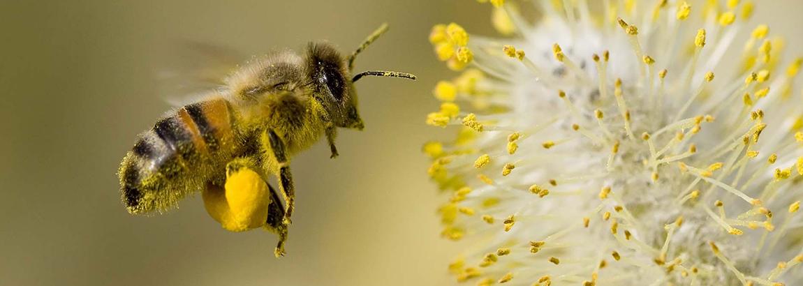 Que se passe-t-il dans la ruche au mois de Mars ?