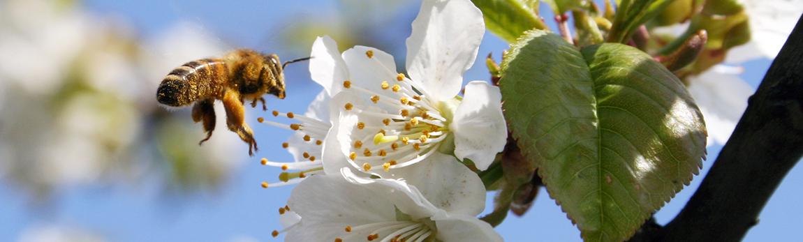 Que se passe-t-il dans la ruche au mois d'Avril ?