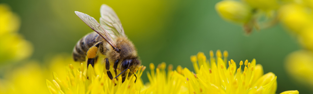 Que se passe-t-il dans la ruche au mois de Mai ?