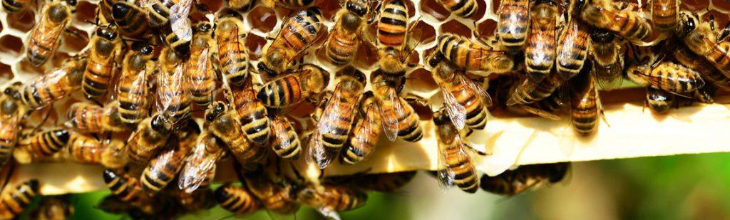 Que se passe-t-il dans la ruche au mois d'Août ?