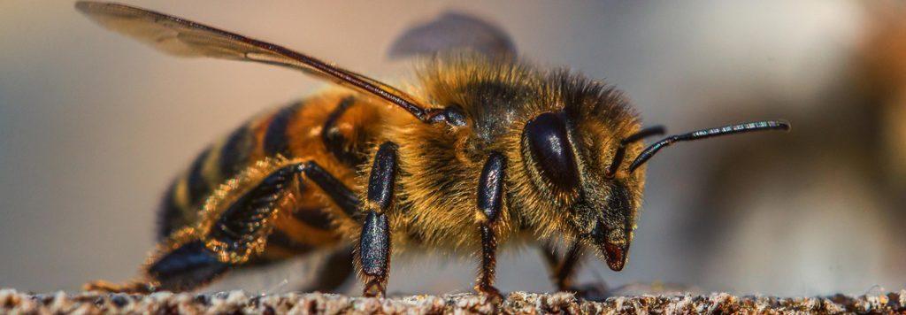 Que se passe-t-il dans la ruche au mois d'octobre ?