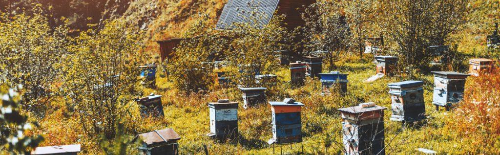 Que se passe-t-il dans la ruche au mois de Novembre ?