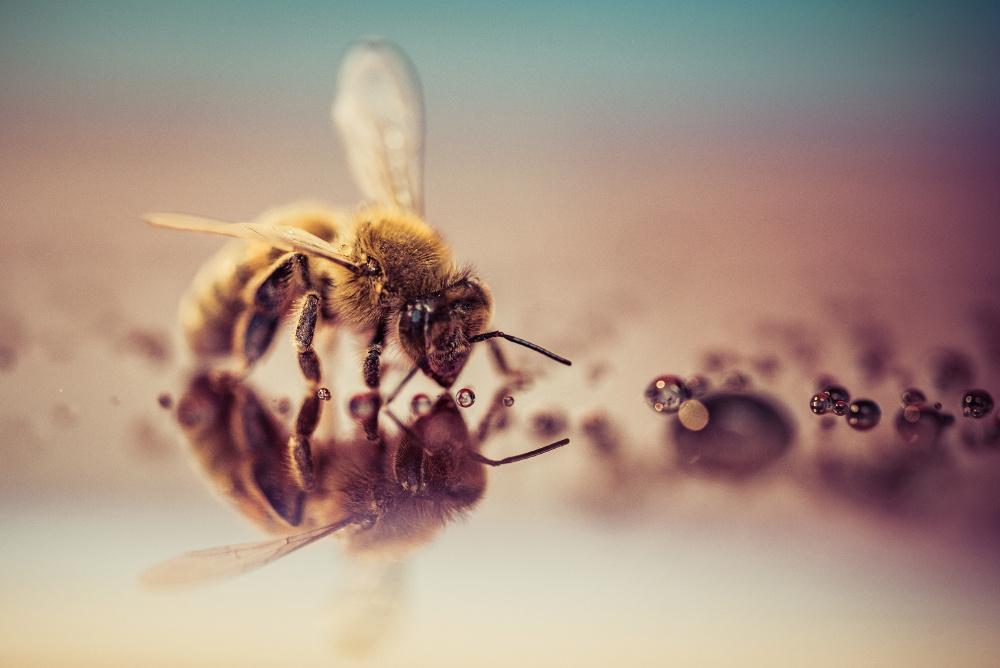 Que se passe-t-il dans la ruche en Décembre ?