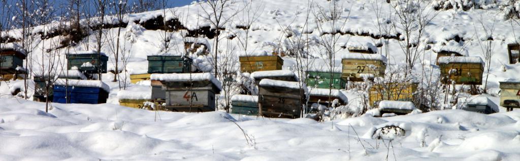 Que se passe-t-il dans la ruche en Janvier ?