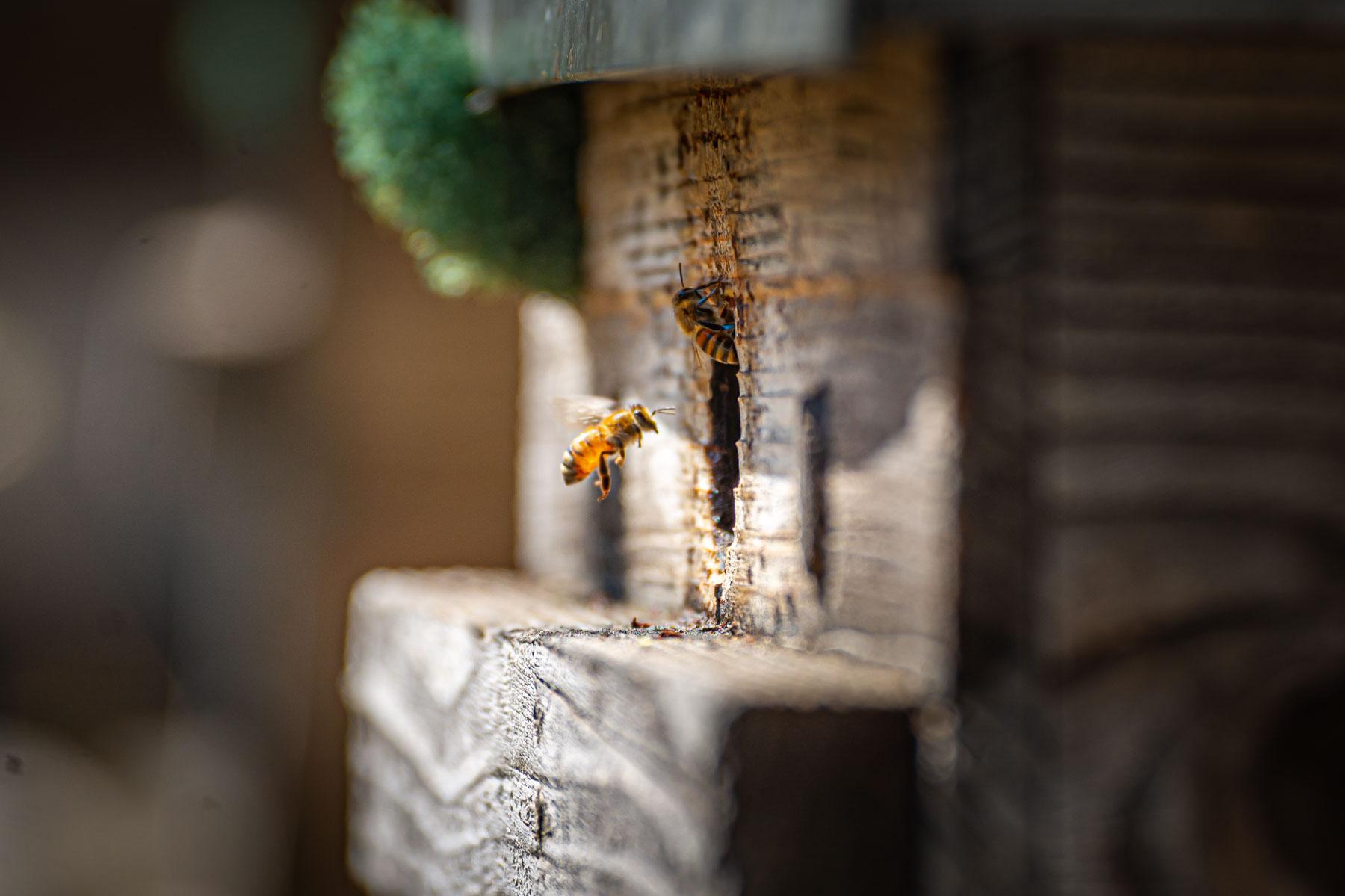 Des ruchers sous haute protection !