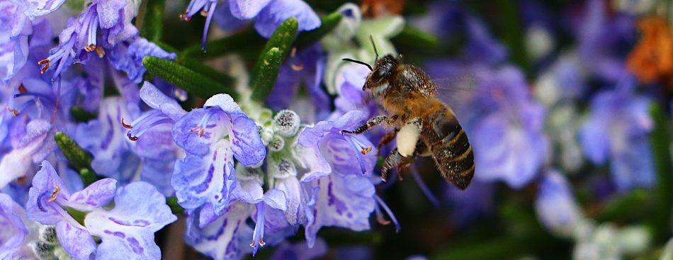 Que se passe-t-il au rucher en mars