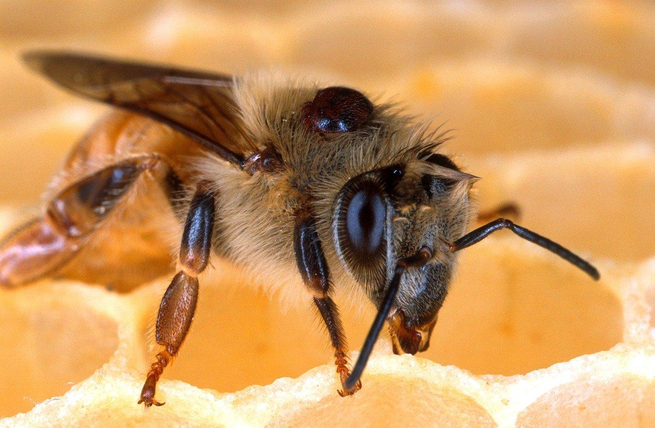 au rucher en mars