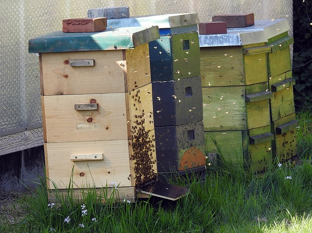 Pourquoi la Ruche Warré est-elle une «ruche écologique» ?