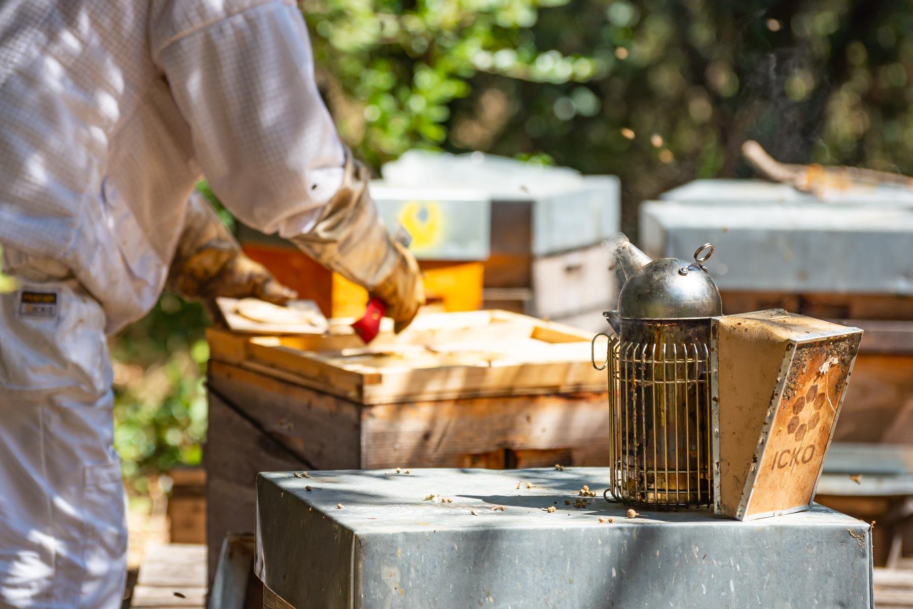 juillet surveillance au rucher